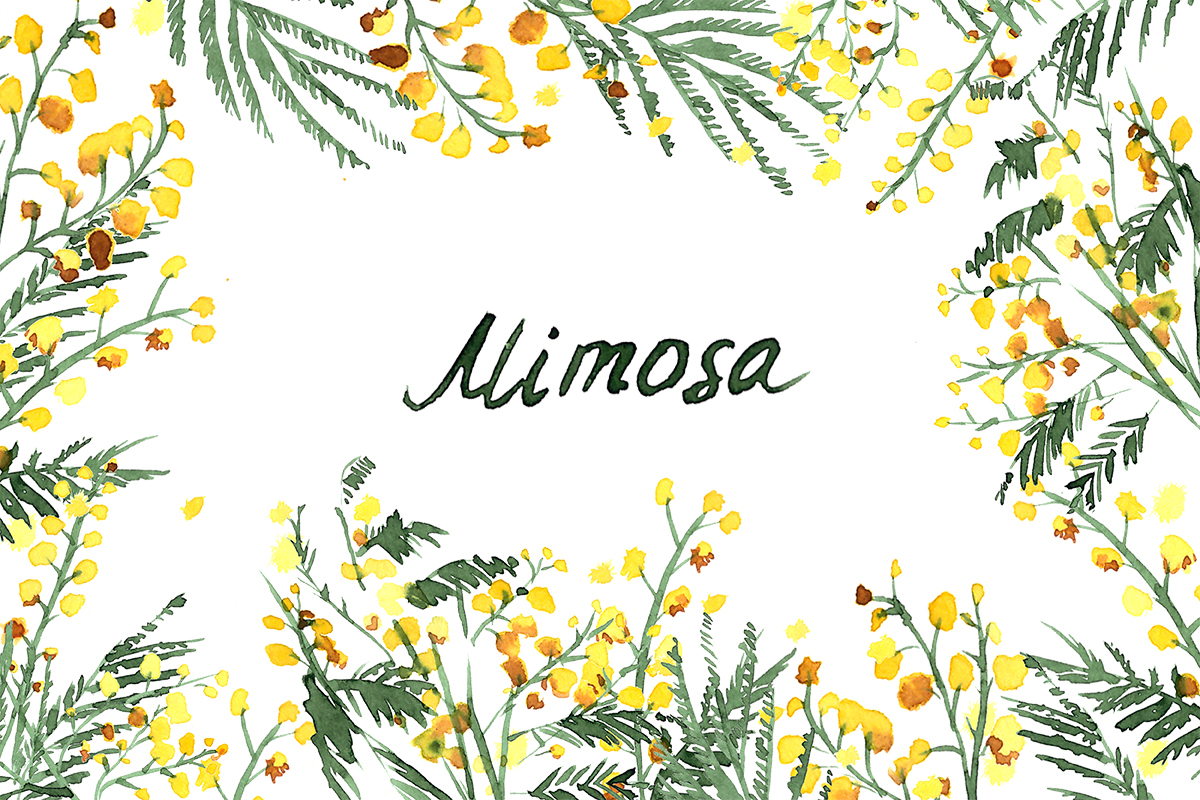 Mimosa flowers watercolor clipart on Behance.