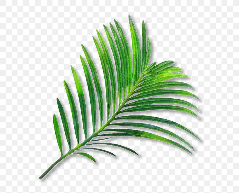Palm Trees Clip Art Leaf Coconut Watercolor Painting, PNG.