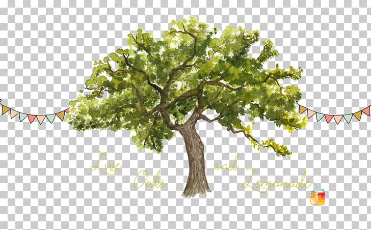 Tree Trunk Watercolor painting Northern Red Oak , Live Oak.