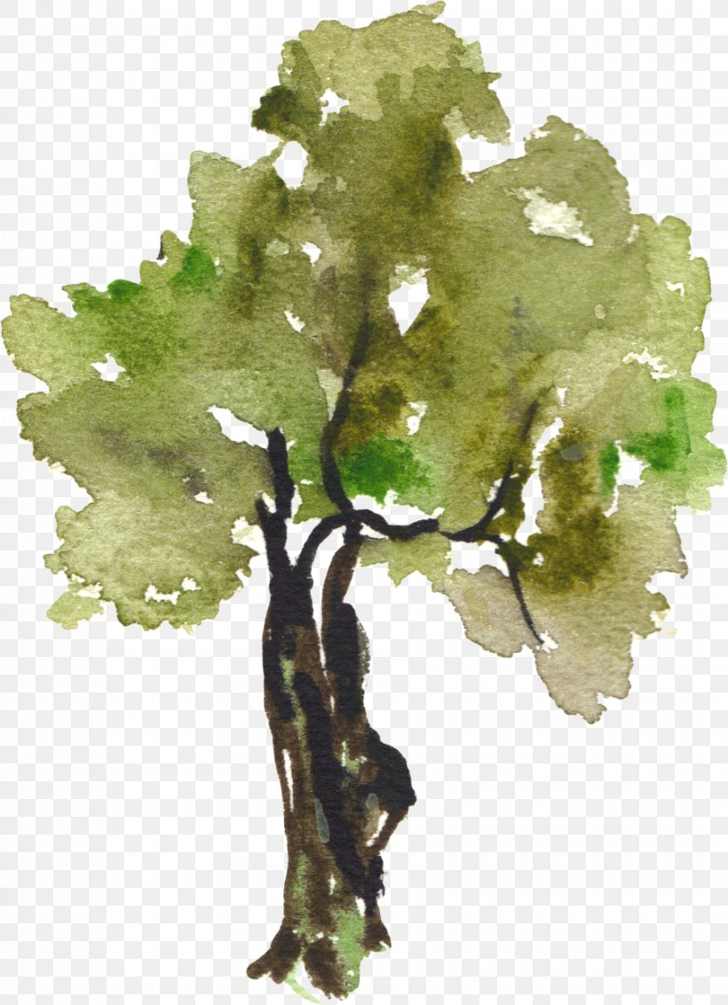 Tree Watercolor Painting Clip Art, PNG, 902x1246px, Tree.