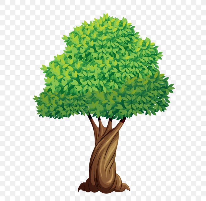 Tree Elm Plant Clip Art, PNG, 588x800px, Tree, Branch.