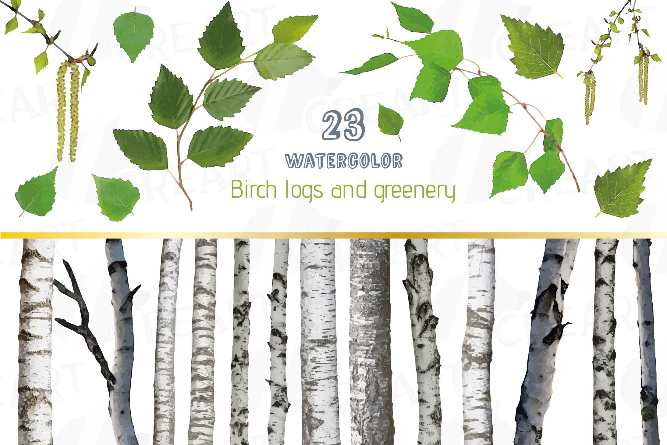 Watercolor Birch Tree Clip art, leaves greenery, trunk decor.