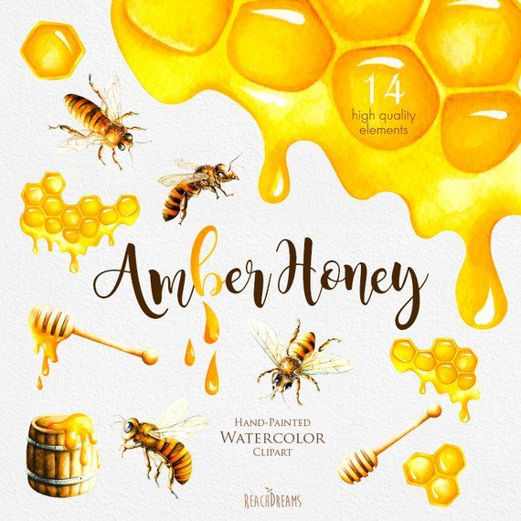 Watercolor Honey Bee Clipart, Honeycomb, Hand painted.