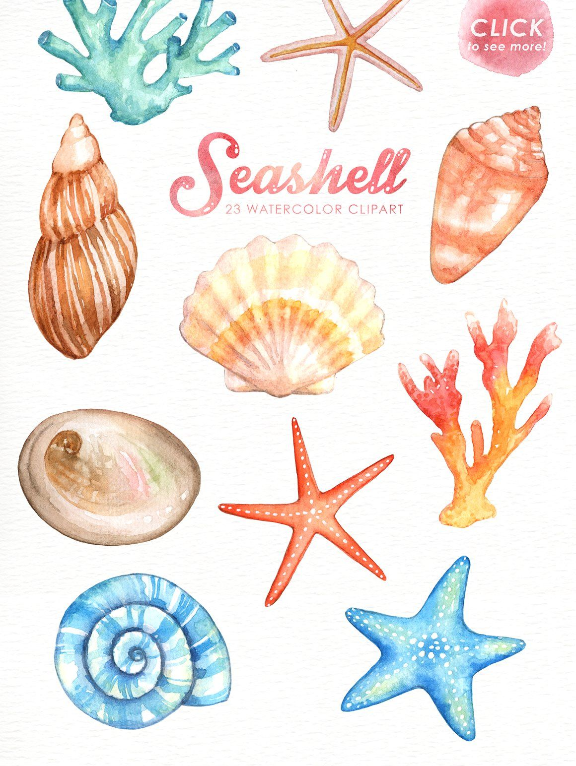 Seashell Watercolor cliparts by everysunsun on.