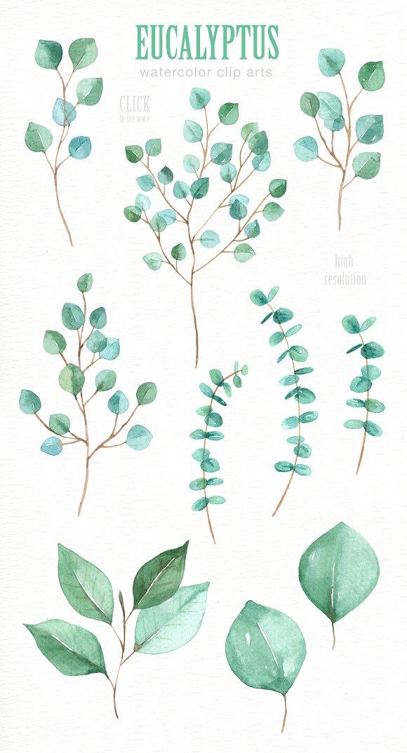 Eucalyptus Leaf Watercolor clipart.