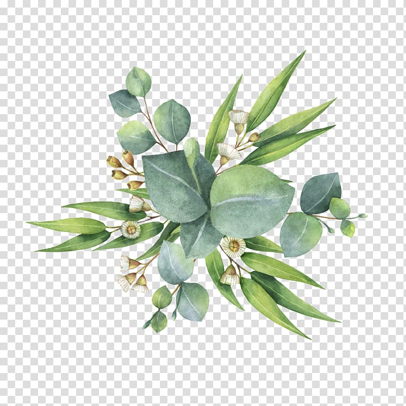 Watercolor painting Flower bouquet Leaf, eucalyptus, green.