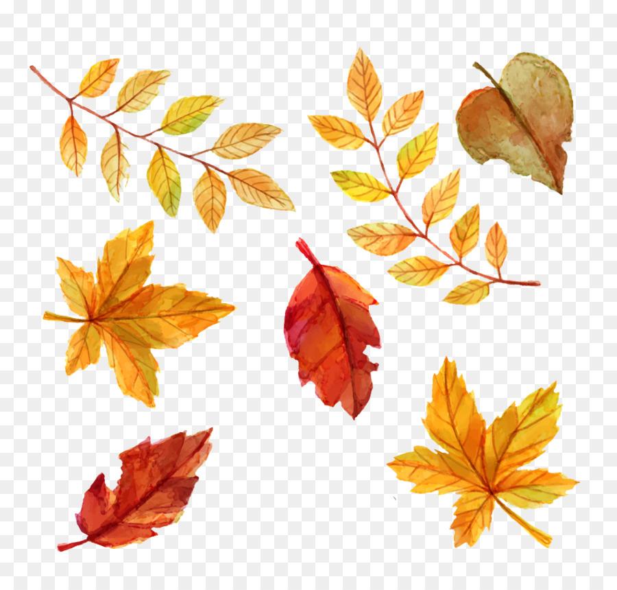Download Free png Autumn leaf color Euclidean vector.
