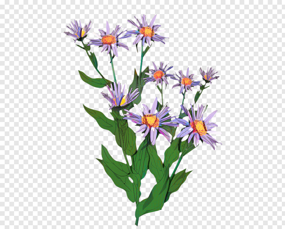 Watercolor Flower, Aster, Plants, Plant Stem, Painting.