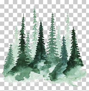 Study of a Tree Watercolor painting Pine, forest, green.