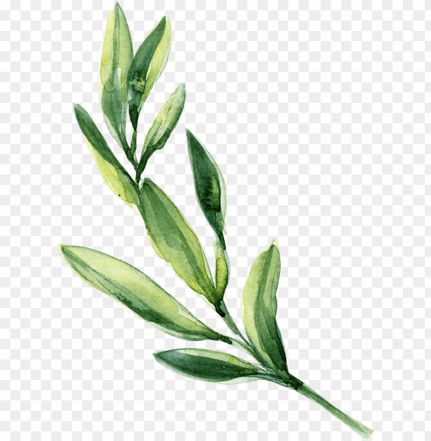 0℃素材23 watercolor leaves, leaf clipart, green leaves.