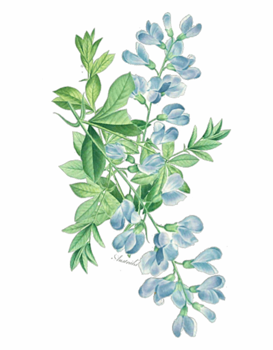 ftestickers #watercolor #floral #leaves #greenery Free PNG.