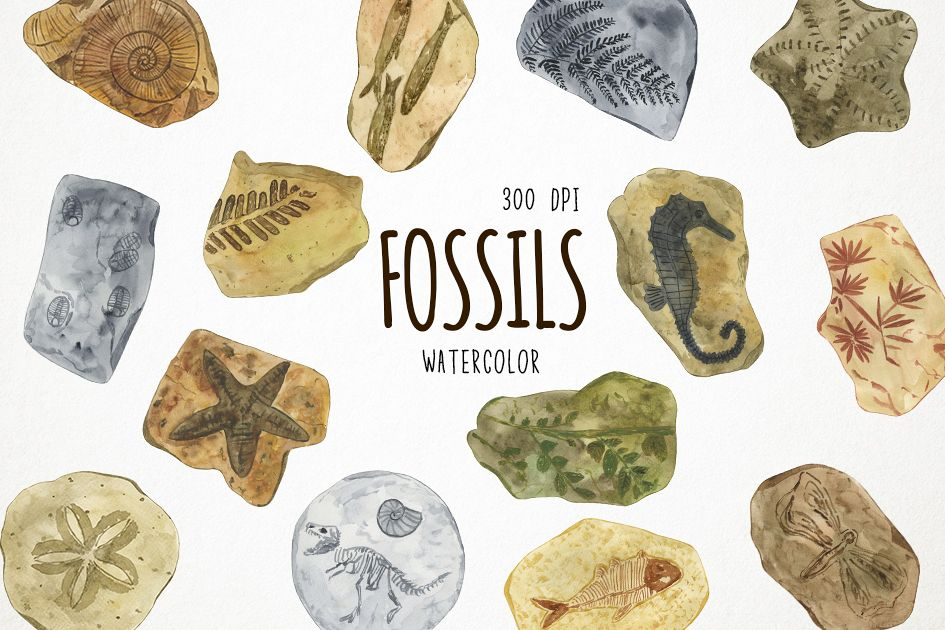Watercolor Fossils Clipart, Fossils Clip Art, Fossil Clipart.