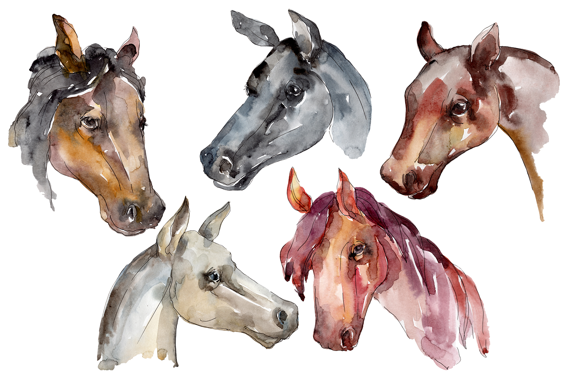 Farm Animals: Horse Head Watercolor Png.