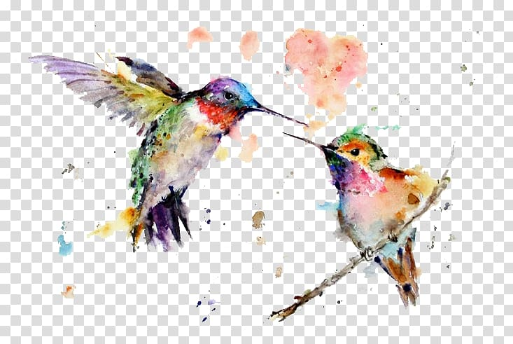Two green hummingbirds illustration, Hummingbird Watercolor.