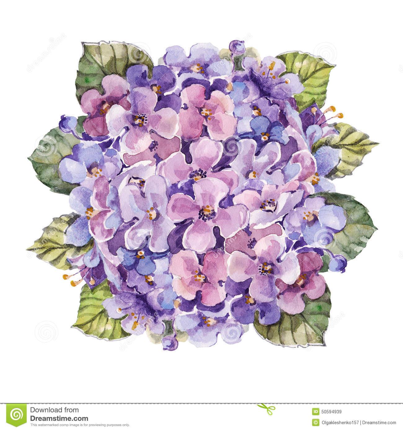 Watercolor Hydrangea Clipart.