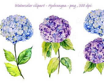 Hydrangeas painting.