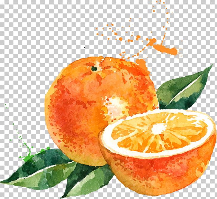 Watercolor painting Drawing Orange Illustration, orange.