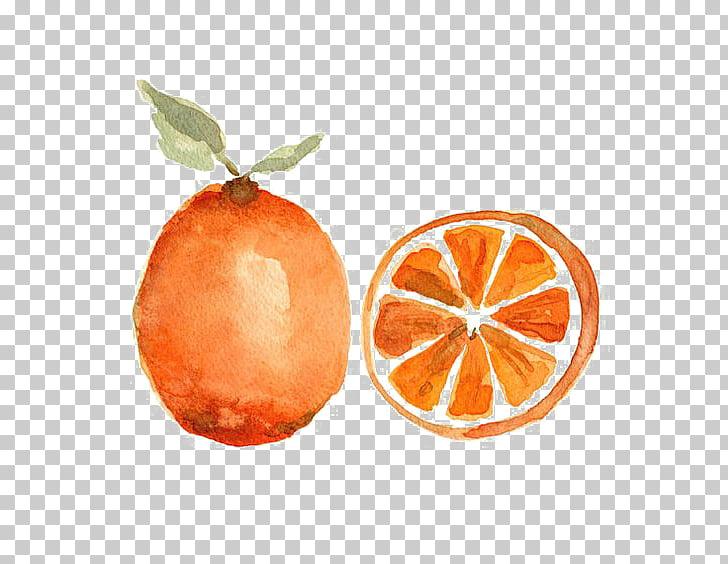 Watercolor painting Orange Fruit Still life, orange PNG.