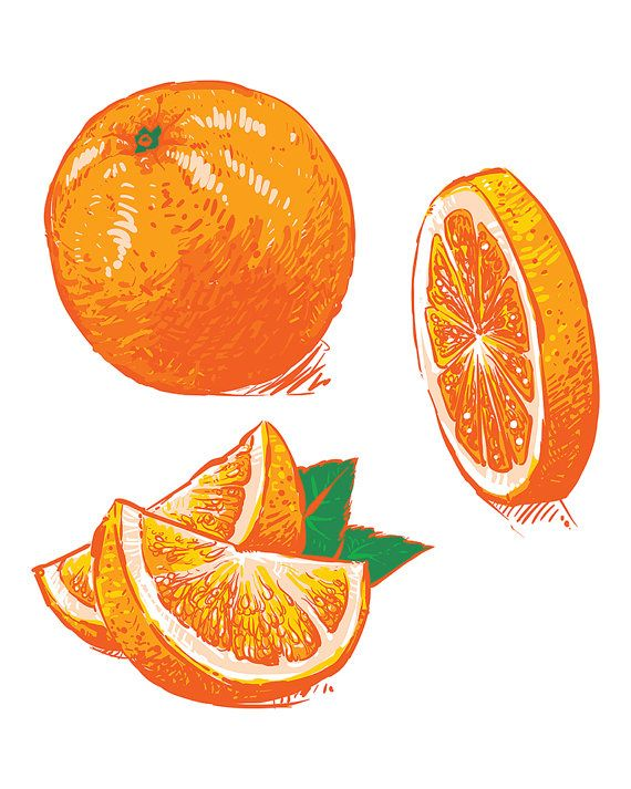 80% Off Sale Vector collection of fresh ripe oranges.