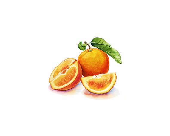 Oranges watercolor, Oranges illustration, Watercolor fruit.