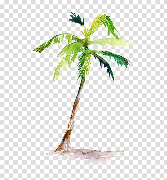 Green palm tree illustration, Watercolor painting Arecaceae.