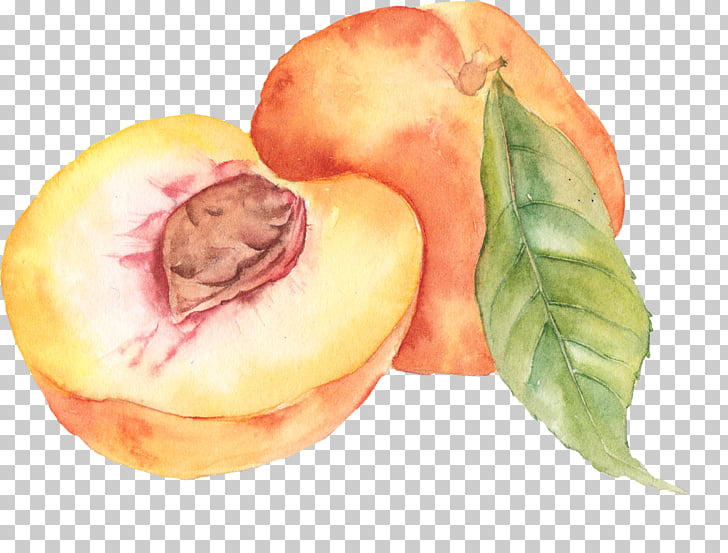 Watercolor painting Peach Drawing, peach PNG clipart.