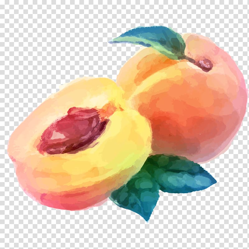 Sliced peach illustration, Watercolor painting Peach Fruit.