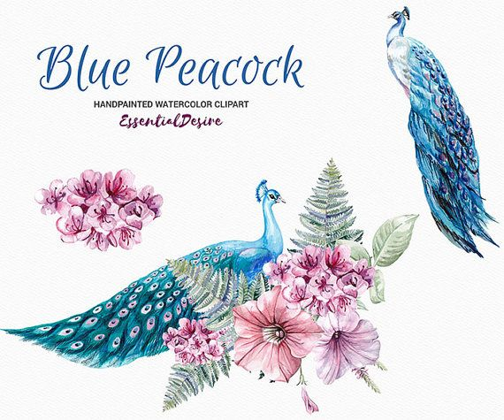 Blue Peacock Clipart Watercolor, Hand Painted Clip Art.