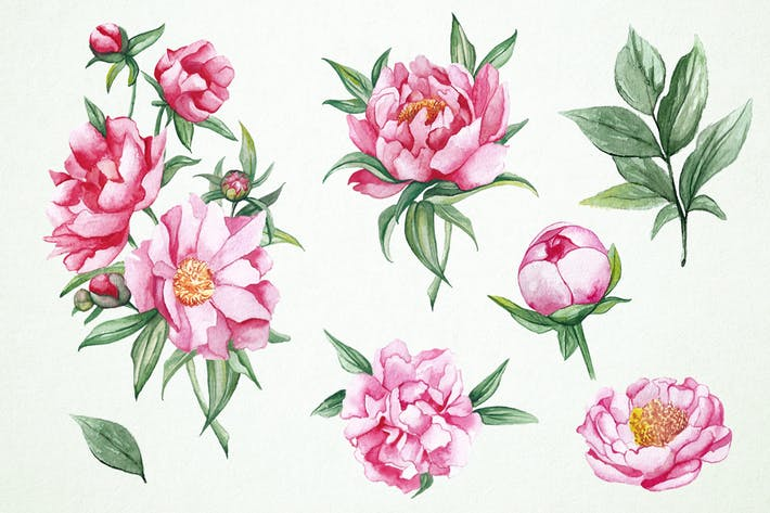 Watercolor Peonies Clipart by Jumsoft on Envato Elements.