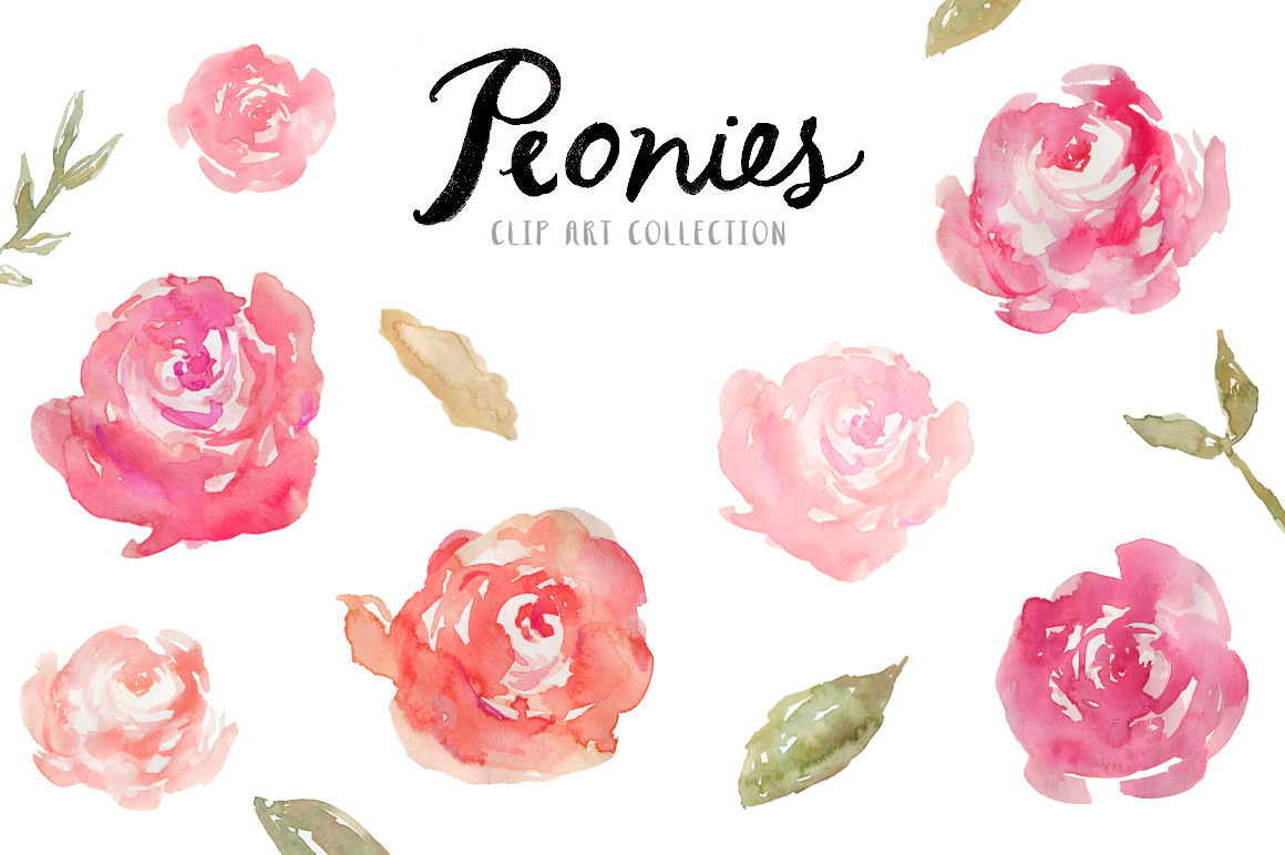 Watercolor peony clipart.