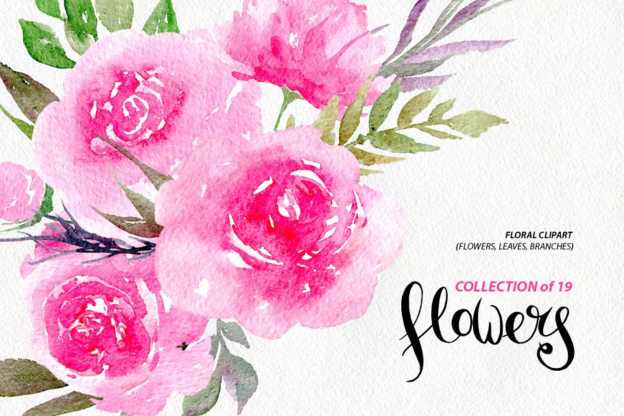 Watercolor pink peonies, 19 png.