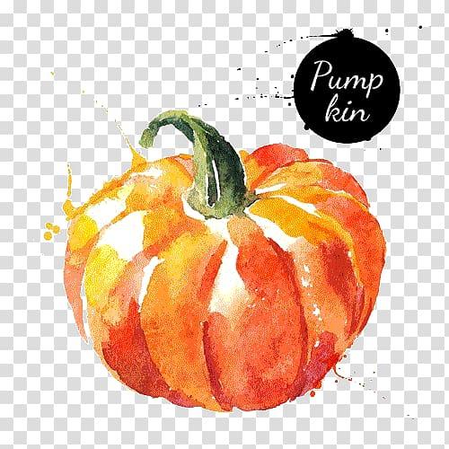 Pumpkin painting, Watercolor painting Vegetable Drawing.