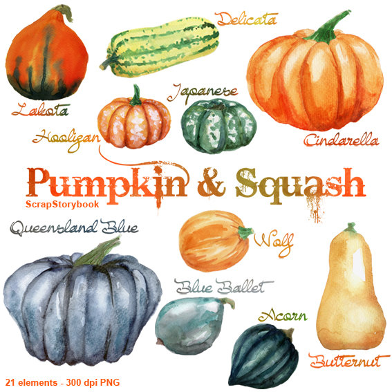 Watercolor Pumpkin and Squash Set digital printable clipart.