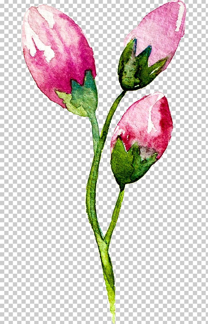 Creative Watercolor Watercolour Flowers Watercolor: Flowers.