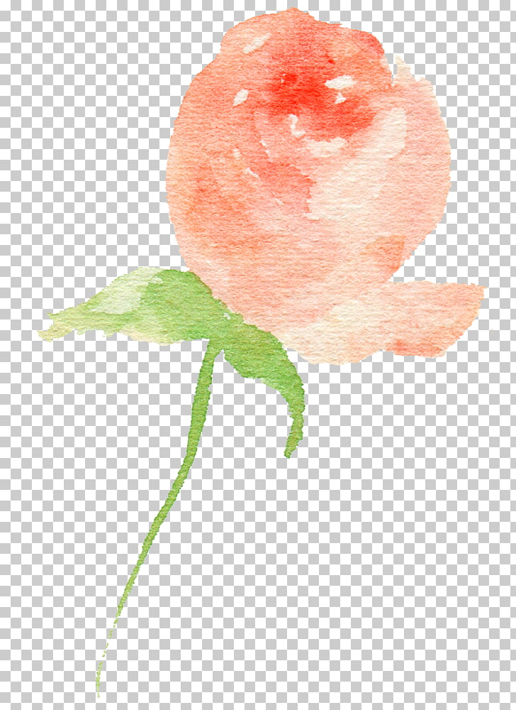 Rose Bud, Hand drawn Rose bud PNG clipart.