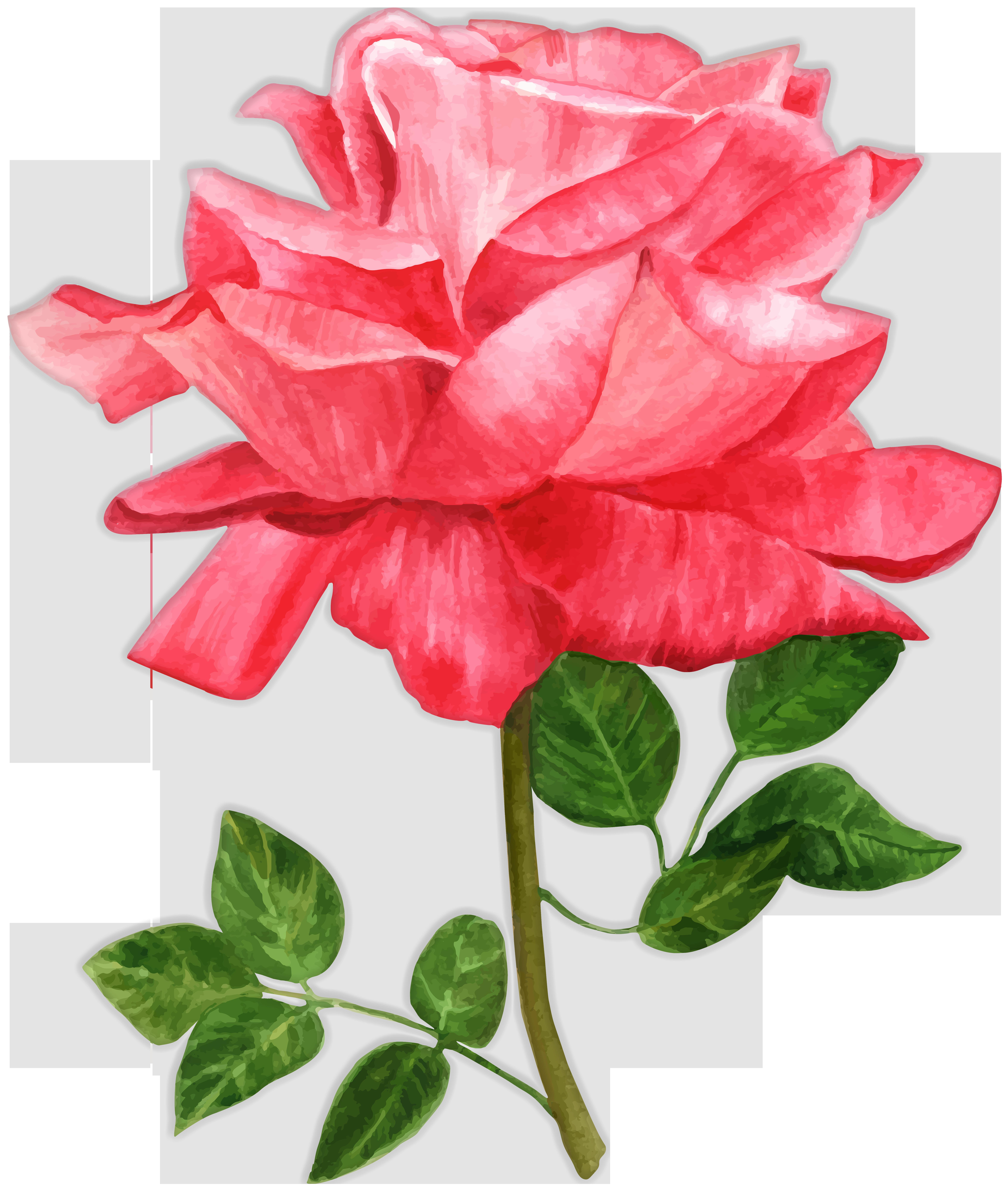 Watercolor Rose PNG Clip Art Image.