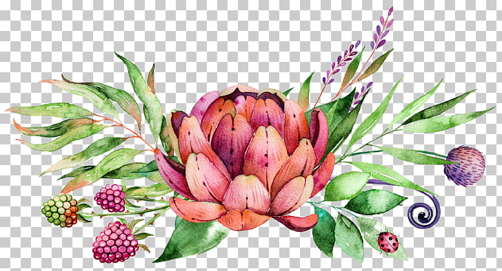 Watercolor painting Flower, succulent plants, pink and red.