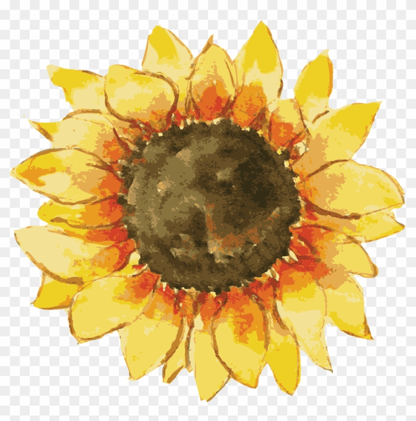 Sunflower Png, Watercolor Sunflower, Watercolor Stickers.