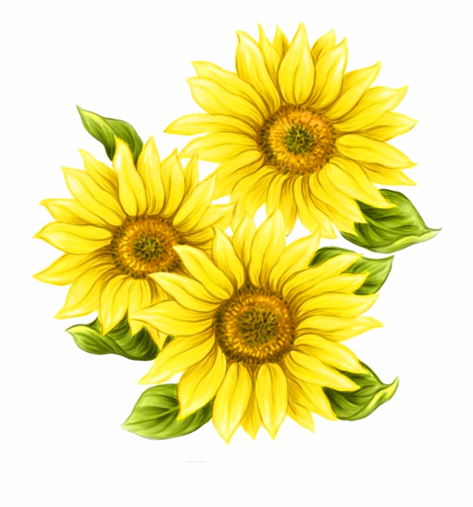 Sunflowers Png Painted.