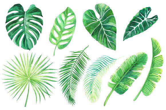 Tropical leaves. Watercolor clip art by anyuka on Behance.