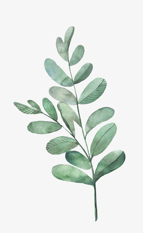 Watercolor Leaves Clipart.