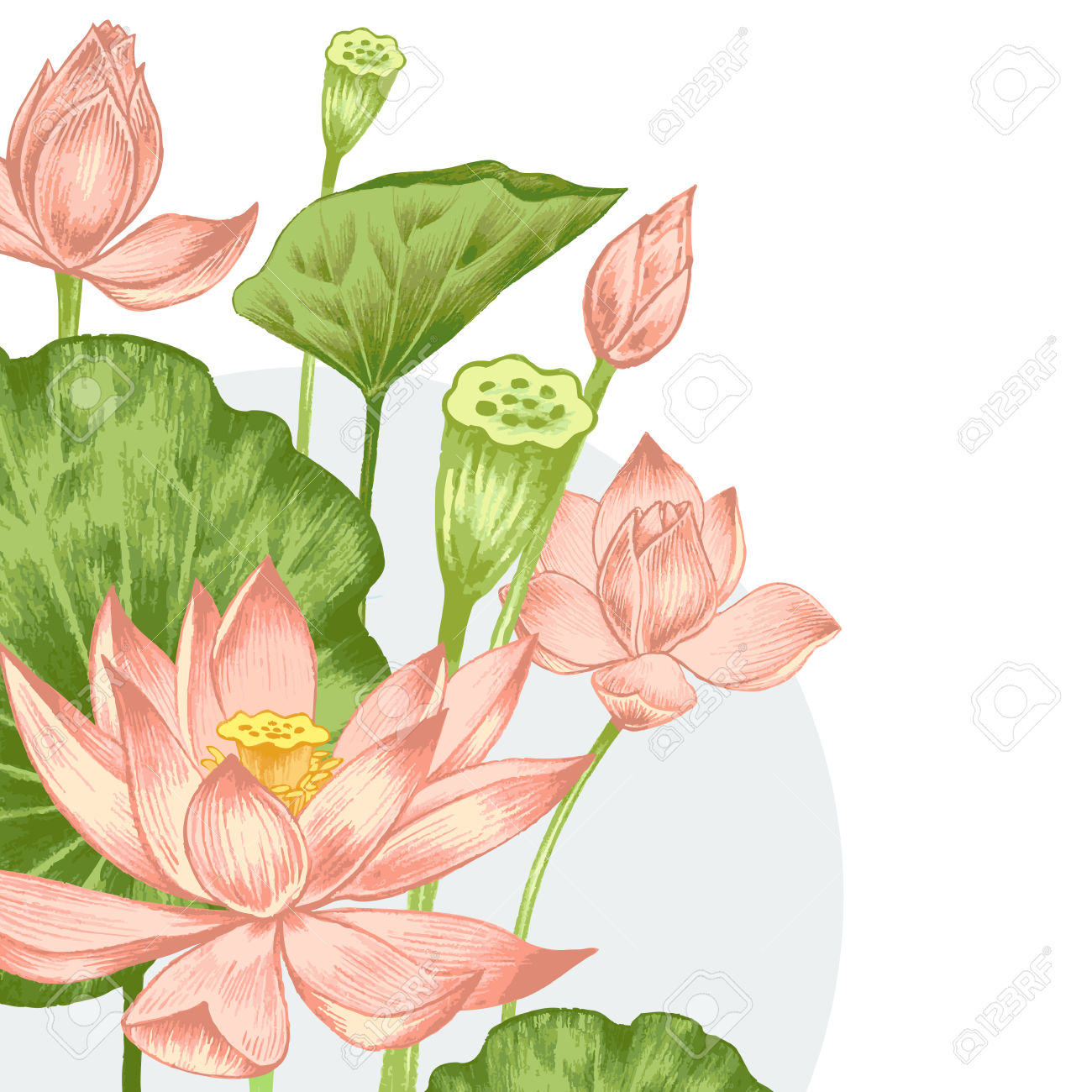 Vector. Illustration With Exotic Flowers In The Art Watercolor.