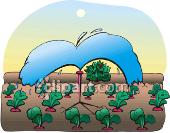 Radishes in a Garden Being Watered Clipart Picture.
