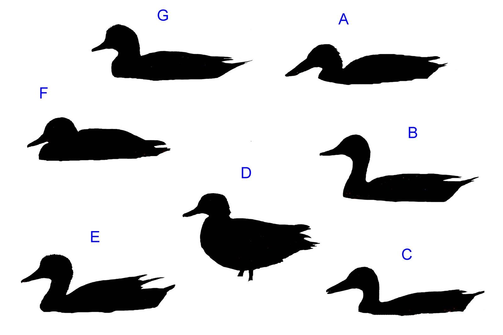 Duck Silhouette.