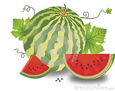Watermelon Vines Seamless Tile Royalty Free Stock Photo.