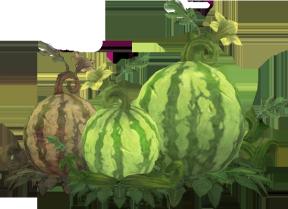 Watermelon Clipart.