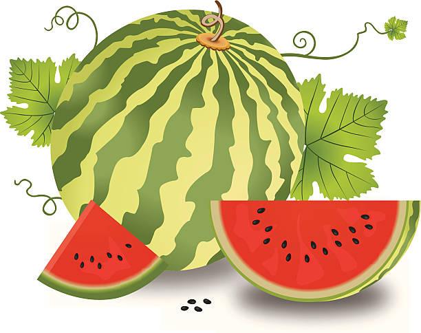 Watermelon Vine Clip Art, Vector Images & Illustrations.