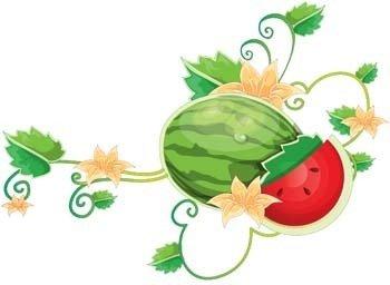 Watermelon 7 clip arts, clip art.