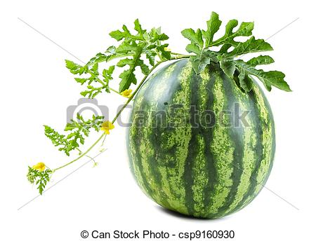 Watermelon plant Stock Photos and Images. 4,324 Watermelon plant.