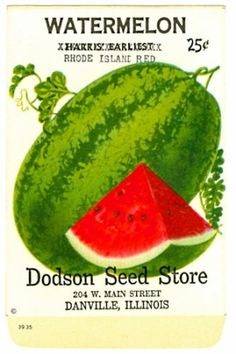 EVERITT'S SEED STORE, Watermelon 349, Vintage Seed Packet.